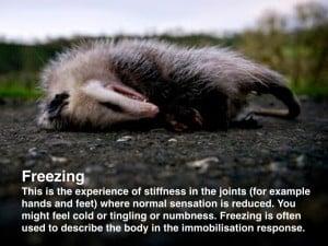 definition of freezing in trauma treatment
